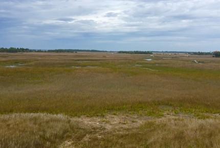 Marsh--Mellow in Wild Dunes Resort - Isle of Palms, South Carolina