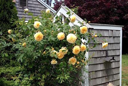 Orleans, Cape Cod, Nature Lovers Paradise - East Orleans, Massachusetts