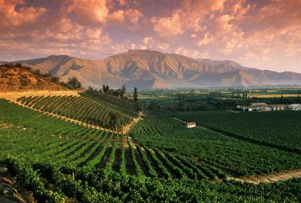 CURATED WINE ROUTES
