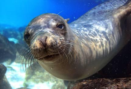CURATED AQUATIC VOYAGES - Galapagos Eco-Yacht Safari Cruise, Ecuador