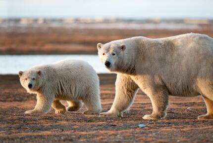 CURATED ECO EXPEDITION - Polar Bear Rover Adventure, Churchill Manitoba