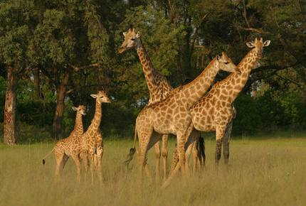 CURATED ECO EXPLORINGS SAFARI - Wildest Heart of Africa, Botswana