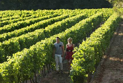 CURATED WINE ROUTES - Vineyard Gems of Provence, France