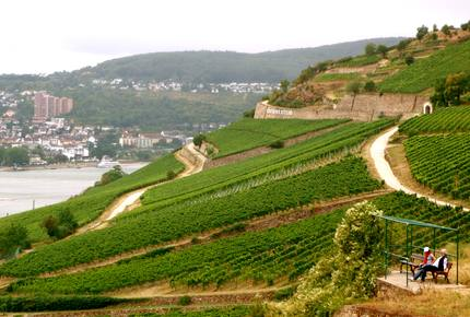 CURATED WINE ROUTES - Rudesheim & The Mosel Valley, Germany