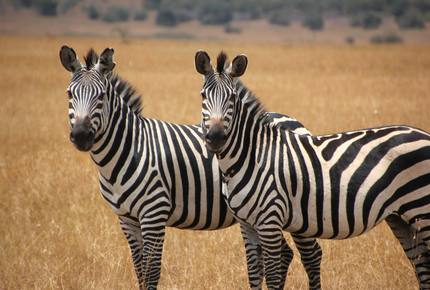 CURATED ROMANCING THE RAILS - SAFARI BY RIVER & RAIL, South Africa