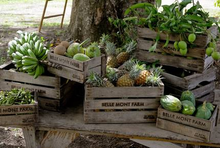 CURATED CULINARY SERIES - Belle Mont Island Farm-to-Table, Saint Kitts and Nevis