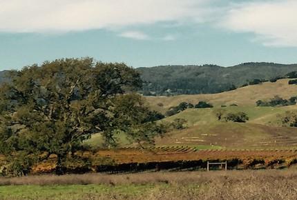 Twin Lookout Ranch - Calistoga, California