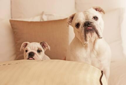 Concierge POSH PET LIFESTYLES