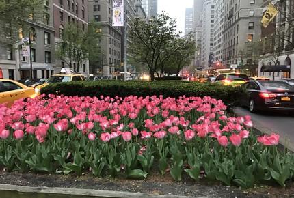 NYC Prestigious Location