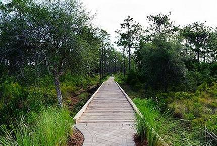 Nature Walk - Seagrove, FL - Santa Rosa Beach, Florida