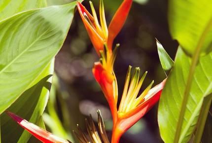 Red Frog Beach - 4 Bedroom Villa - Bocas del Toro, Panama