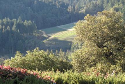 Wine Country Estate - Napa, California